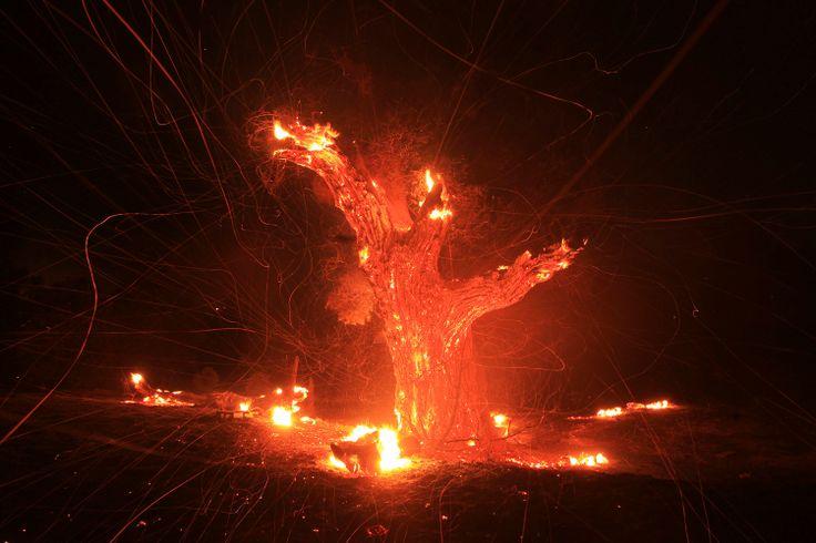 tovább válogatok az év képei válogatásokból -> http://blog.volgyiattila.hu/?p=28659 #fotó #sajtófotó #galéria #válogatás  2013. augusztus 7. A szél hordja szét egy lángoló öreg tölgyfa parazsait, ami a kaliforniai Banning erdőtüzében lángol. A tűz nem sokkal délután 2 után tört ki, mintegy 145 kilométerre Los Angelestől és órák alatt több, mint 2000 hektár erdőt égetett fel.   Fotó: David McNew/Reuters