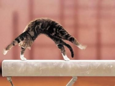 thats how my kitten looks like and acts like she loves to do front flips and cartwels lol
