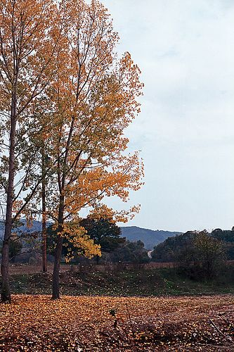 Fallen leaves in Grevena Dytiki Makedonia Greece