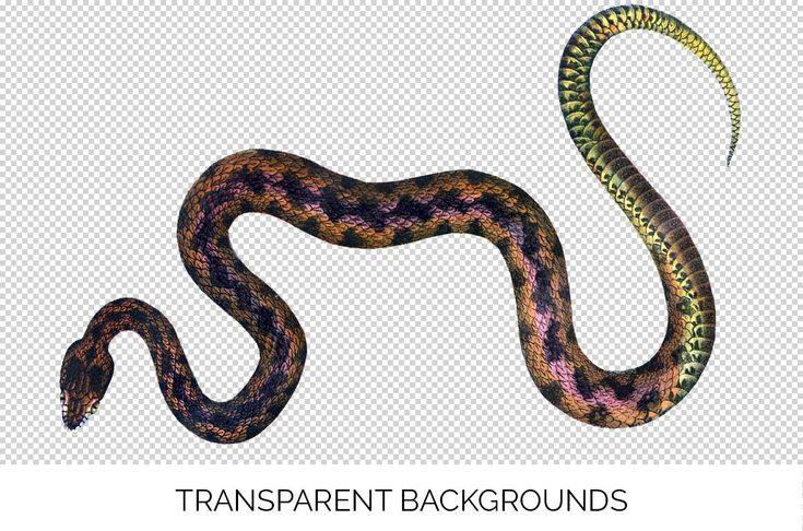 Snake snake common european viper vintage clipart