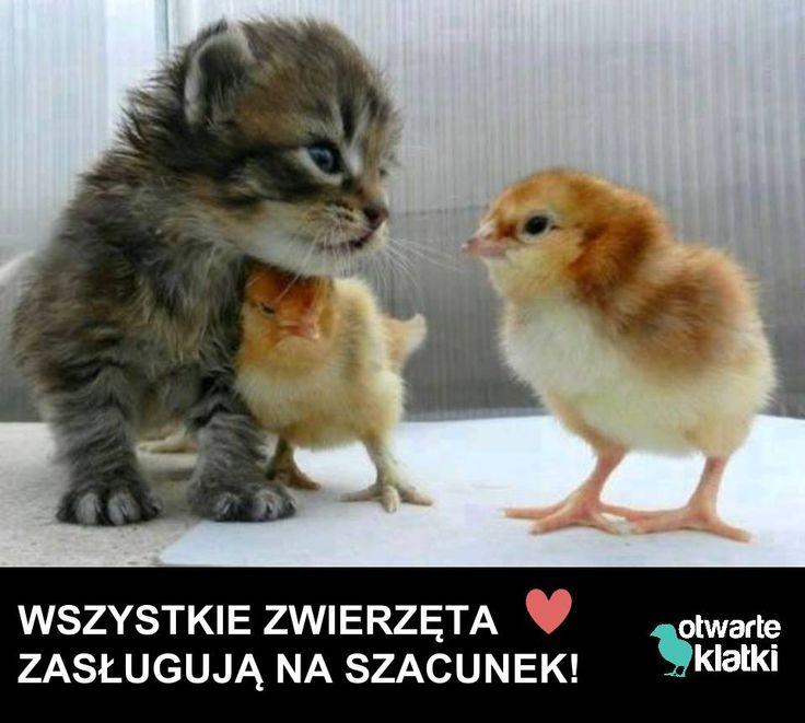 www.otwarteklatki.pl