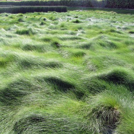 Festuca-rubra - Creeping-Red-Fescue lawn