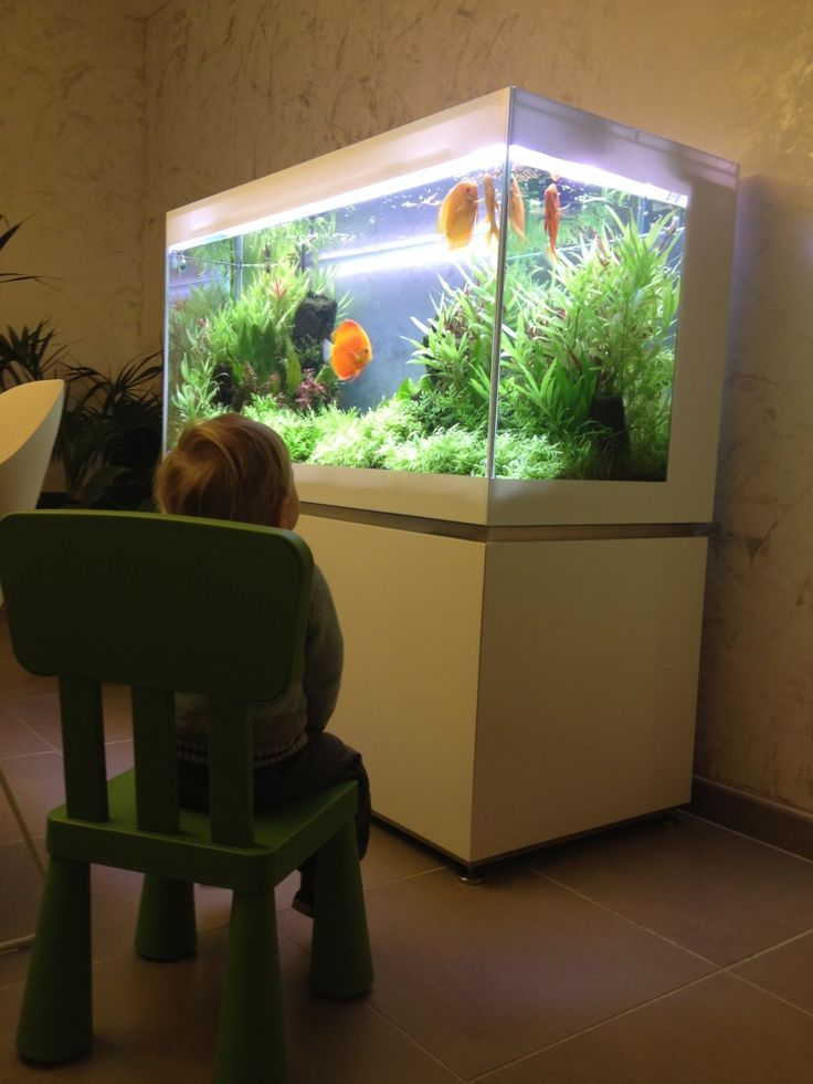 Planted albino discus tank page 2 aquarium pinterest for Planted fish tank