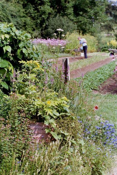WALA herb garden.