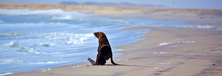 Luderitz-seal-namibia-safari
