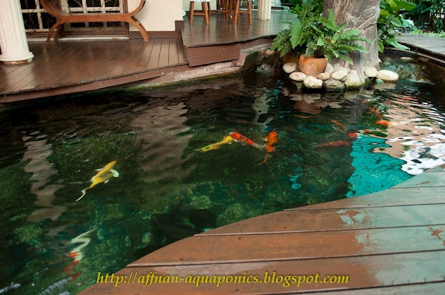 41 curated aquaponics ideas by unacasaecologic gardens for Garden pool aquaponics