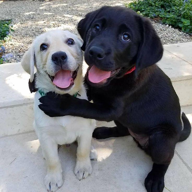 ¿Quién es tu bestia? 🤗 Cute puppies – CHECK 👉 15+ gif images of W … – Petra Hennemann   – Hunde