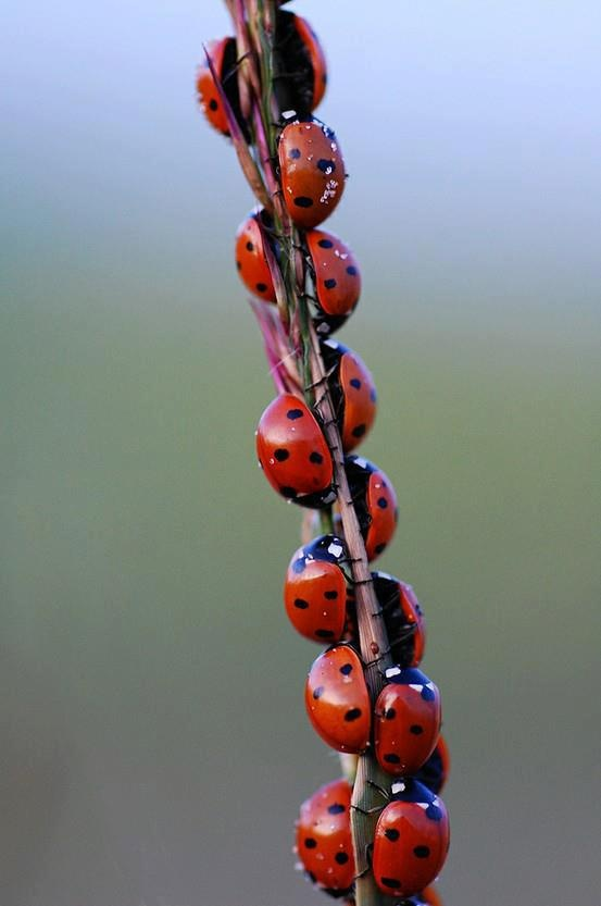 Flora, Goddess of Flowers and Spring: How to Attract Ladybugs to Your Yard