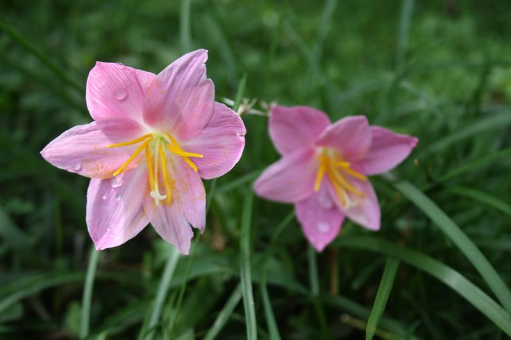 Flores después de la lluvia