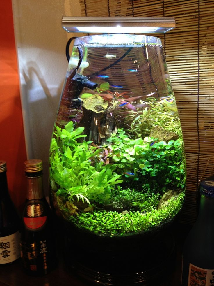 Vase aquarium pas cher for Grand aquarium rond