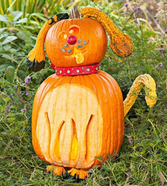 Cute animal pumpkin carvings imgkid the image