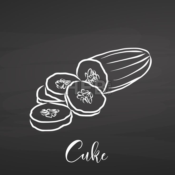 Cucumber vegetables drawing on chalkboard. Hand drawn healthy food sketch. Black and White Vector Drawing on Blackboard. ... ... by #Hebstreit