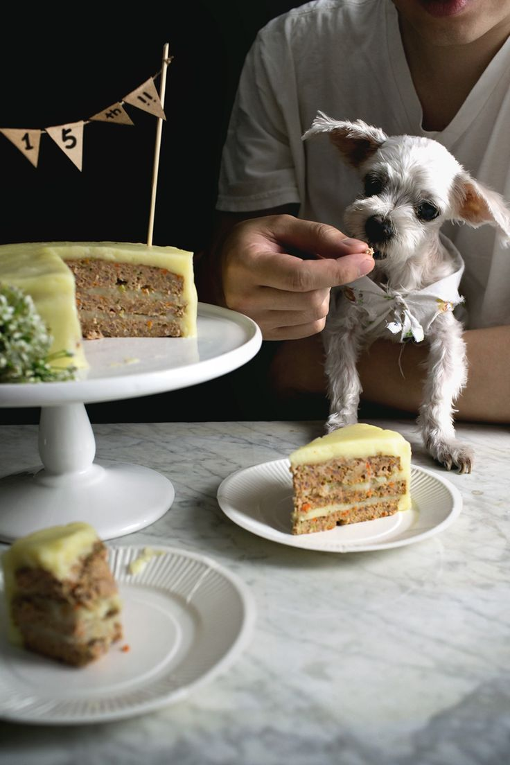 """Birthday cake for DOGS!!  Nutritionally balanced, meatloaf b-day cake """"frosted"""" with mashed potatoes."""