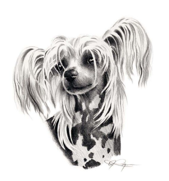 Ugly Dog Breed Clipart