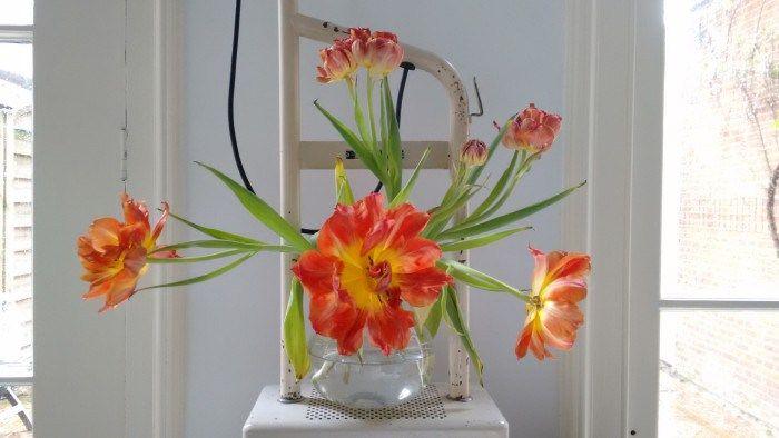 Tulipani, sfumature e ispirazioni