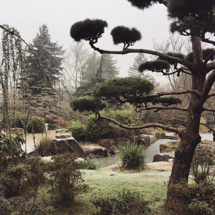 #JardinJapones #ÎleDeVersailles #Île #Versailles #Jardin #Japones #Nantes #France #Loire #Hiver #Arbre #Nuageux #JapaneseGarden #Japanese #Garden #Nature #Trees #Winter #Frozen #Clouds #Giardino #GiardinoGiapponese #Giapponese #Inverno #Francia #Nuvole #Alberi #Brina