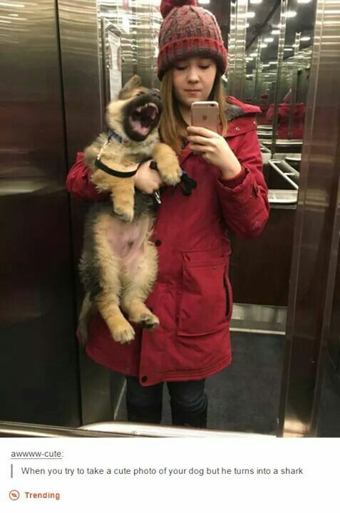 visit www.amazingdogtales.com for the best funny dog joke pics,inspirational dog stories and dog news.... Hey put down the phone and look at me! Says this cute little German shepherd.