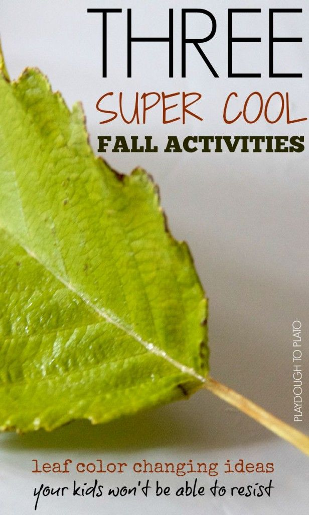 The Biological Significance of Leaf Color Change