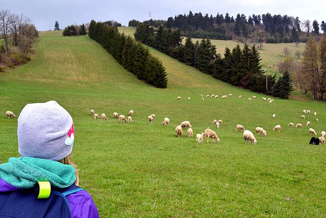 Active Long Weekend Góry Sowie, Poland - sheeps :)
