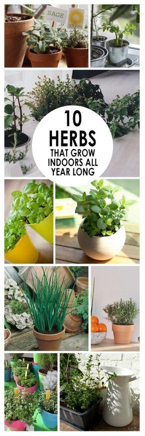 Best 25+ Herb garden indoor ideas on Pinterest | Indoor herbs ...