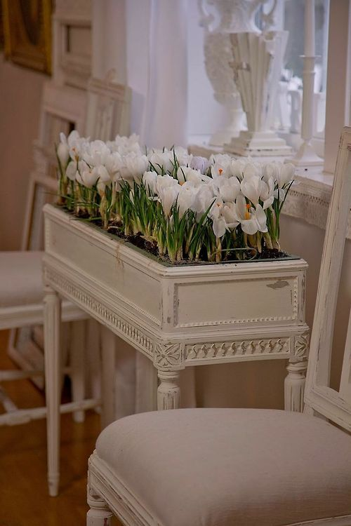love this idea - plant the crocus inside for an indoor garden
