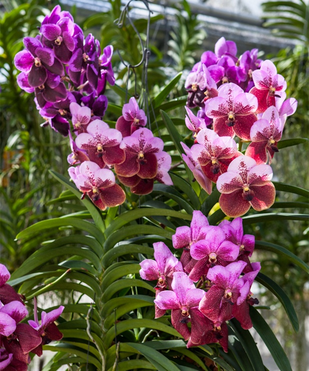 Orchids besides 70094076 likewise 45458277460807280 furthermore Cactus Garden Medium further Asian Landscape Garden Terrarium With. on mini orchid care