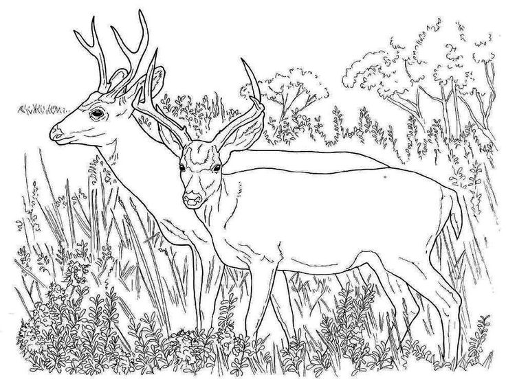 reindeer coloring sheet