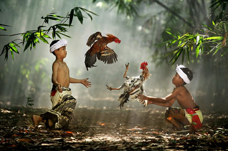 """""""Cockfight"""" - Ario Wibisono, I think you are my new idol when it comes to photography!"""