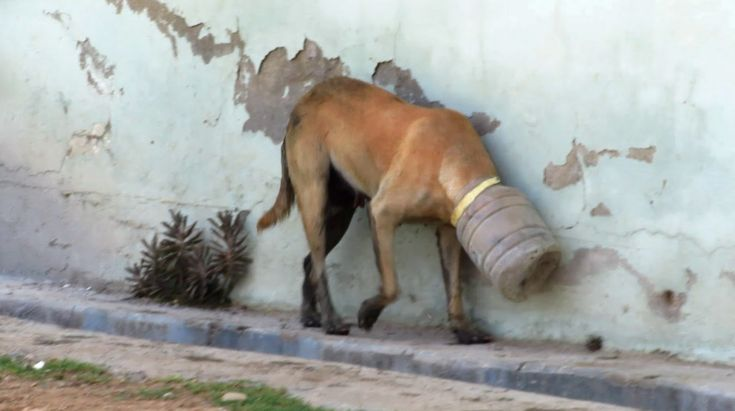 10 amazing animal rescues! | ANIMALS /ANIMAL CAUSES ...