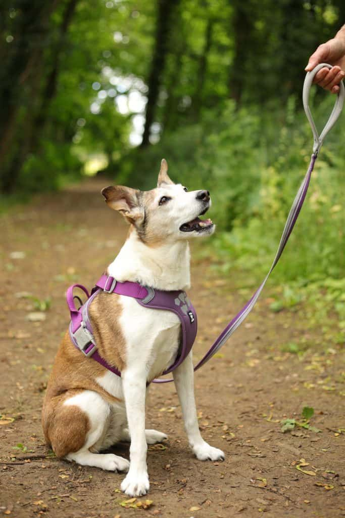 The Weekend Warrior Harness And Lead By Hurtta Review Dog