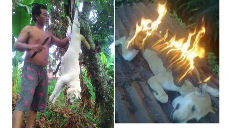 These photos are despicable and extremely difficult to watch. But please understand that by looking the other way, the proble...