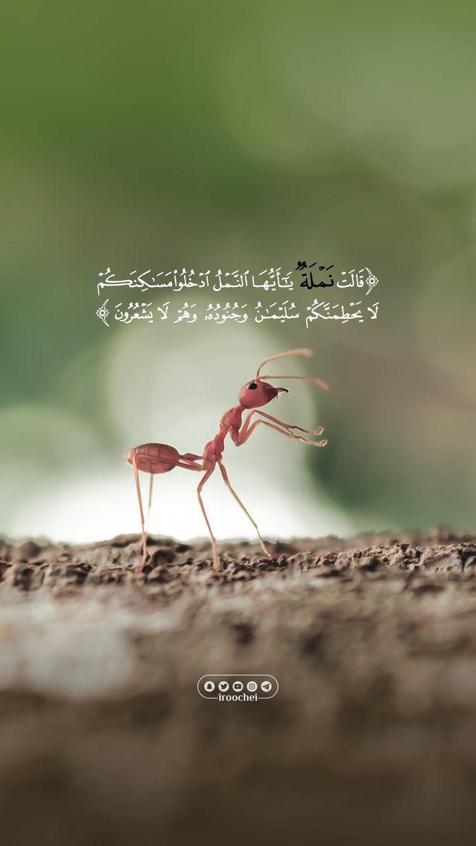 ح ت ى إ ذ ا أ ت و ا ع ل ى و اد ي الن م ل ق ال ت ن م ل ة ي اأ ي ه ا الن م ل اد خ ل وا م س اك ن Quran Verses Islamic Quotes Wallpaper Quran Quotes Love