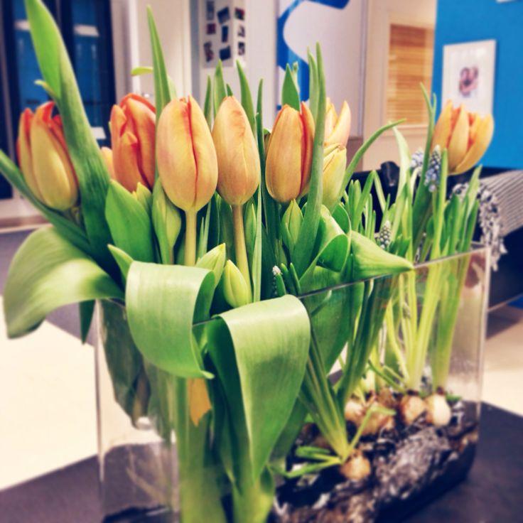 Meidän toimistolla on jo kevät! Helmikuu 2014.