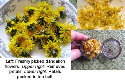 Recipes for Eating Dandelion Flowers