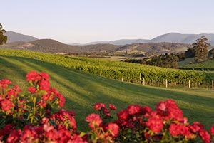 Balgownie Estate, Yarra Valley, Victoria, Australia - a #VisitVineyards fave, good spa too!
