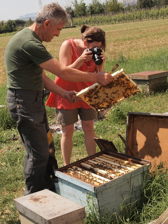 """""""Bee farming and honey at Miele Praconi in San Mauro Pascoli"""" - """"Exploring EmiliaRomagna. Crossing the Rubicon, bees and bikes, and the perfect town"""" by @keaneiscool"""