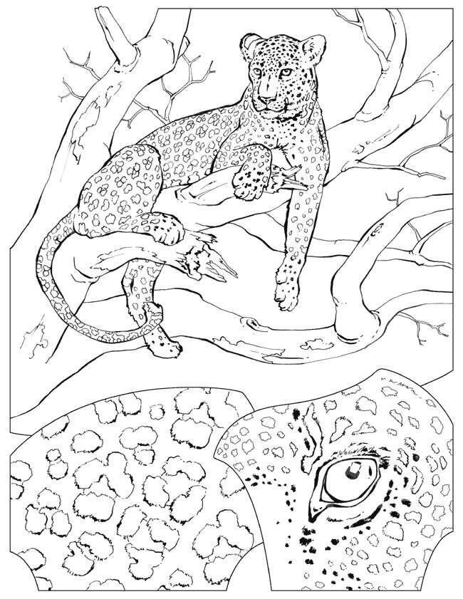 kiyarim c animals coloring pages - photo#36