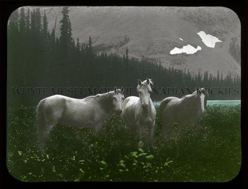 V527 / PS 1 - 37[Horses at Watchman's Lake] [1907]
