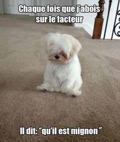 Chien pas très méchant ! http://www.15heures.com/photos/GGqz?utm_source=SNAP #LOL