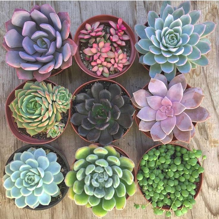 628 Likes, 1 Comments - Succulent SH (@succulent_sh) on Instagram