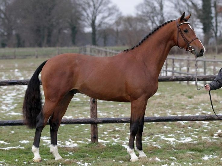 Best 25+ Horse stables for sale ideas on Pinterest Horse barns - horse sales contracts