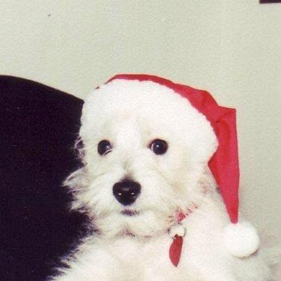 Spread some holiday cheer with this westie puppy! Like her and Like us at Hanging the Moon. https://www.facebook.com/HangingTheMoon: Holidays Cheer, Contest Giveaways, Giveaways Pin, Westies Puppies, Westies Mania