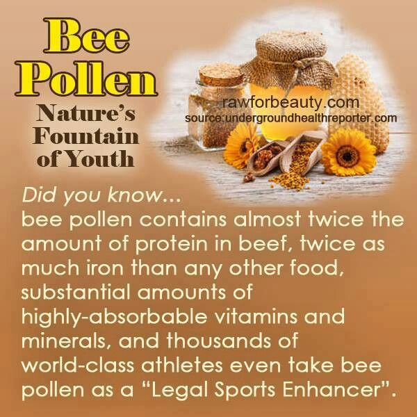 Bees:  #Bee Pollen: Nature's Fountain of Youth. #protein