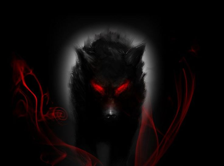 Black wolf wallpaper hd