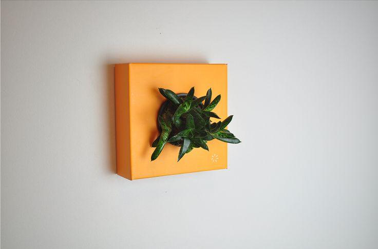 https://flowerbox.com.tr/urun/195/k-pot-tek