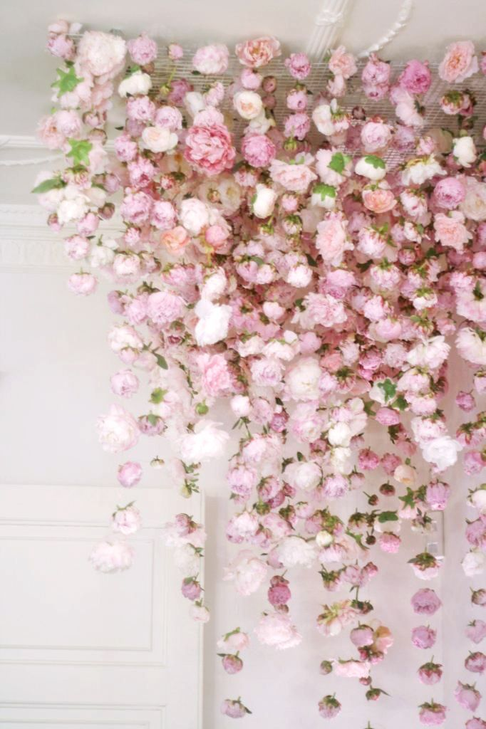 Ceiling display of pink roses
