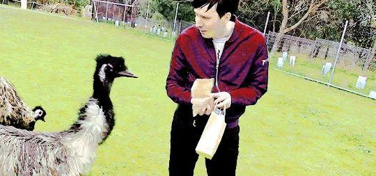 Phil vs emu