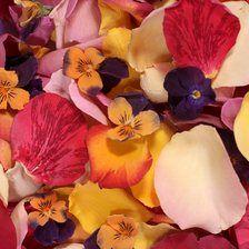 Click to Order Mixed Petals