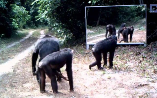 Ecco come reagiscono gli animali quando si vedono allo specchio Il fotografo francese Xavier Hubert Brierre ha deciso di condurre un curioso esperimento: riprendere la reazione degli animali quando si vedono allo specchio. Per realizzare ciò, il fotografo ha posi #animali #videovirali