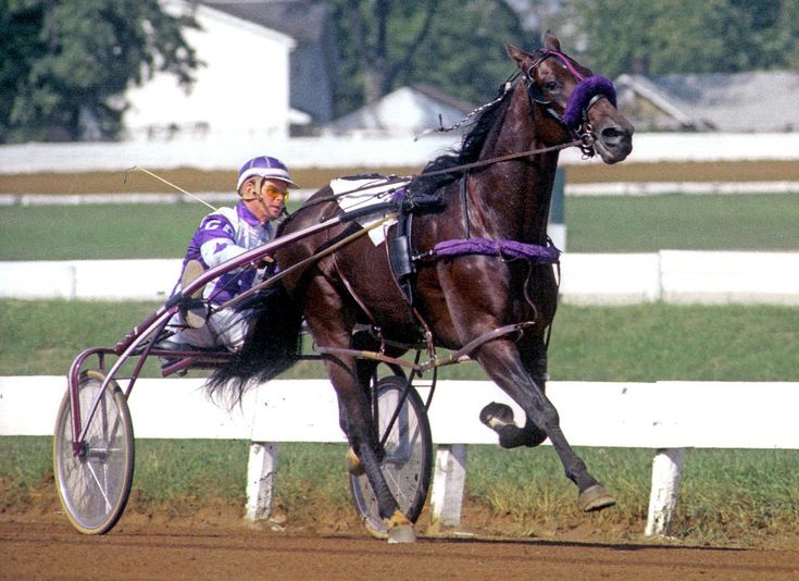 Best Harness Racing Images On   Harness Racing Horse